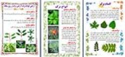 طرح جابربن حیان درباره انواع برگ ها و چرا برگ ها در فصل پاییز تغییر رنگ می دهند